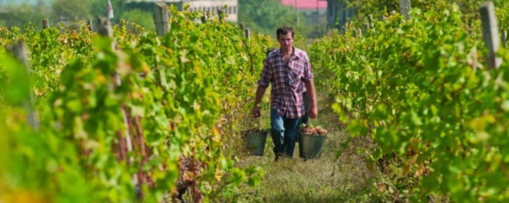 RMG Supports Bolnisi Winemakers