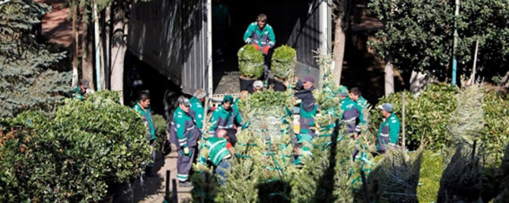 Tbilisi City Hall Plants 10,000 Plants for Greening Efforts in the Capital
